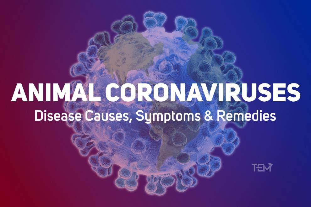 Animal Coronaviruses